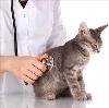 Ветеринарные клиники в Кривошеино